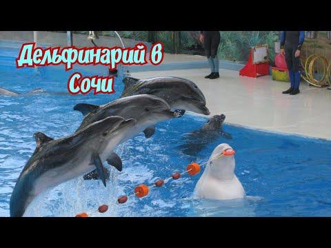 Дельфинарий  Сочи/Дельфины в Сочи/Парк Ривьера/Дельфинарий в Сочи