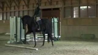 The Training Scale part 1 Rhythm (Natural Horsemanship, Dressage, Western, Jumping)