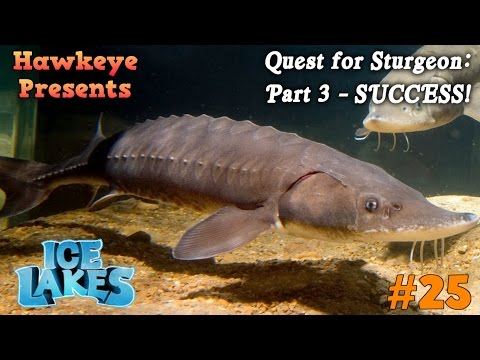 Ice Lakes - Ep. #25 - Quest for Sturgeon: Part 3 - SUCCESS!