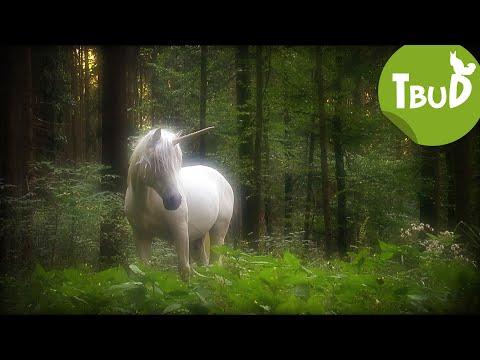 Die Legende von Waldau (Folge 39)   Tiere bis unters Dach   SWR Kindernetz