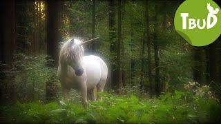 Die Legende von Waldau (Folge 39) | Tiere bis unters Dach | SWR Kindernetz