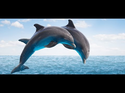 My Travel : KENYA Delfini al Watamu Marine National Park Reserve