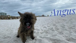 1yo Cairn Terrier (Angus) Best Dog Trainers in Florida