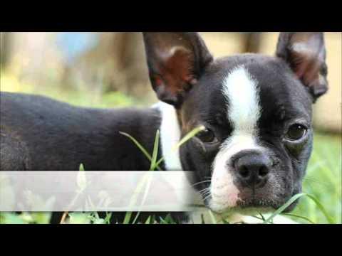 Top 10 Non-Shedding Dogs