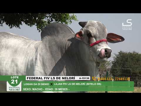 Lote 21 Federal FIV LS