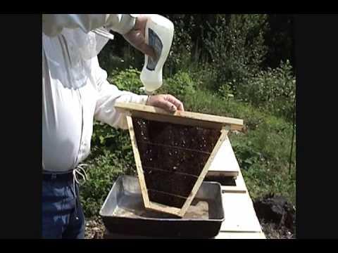 Dave's Bees.com - KTHB Feeder Frame - YouTube