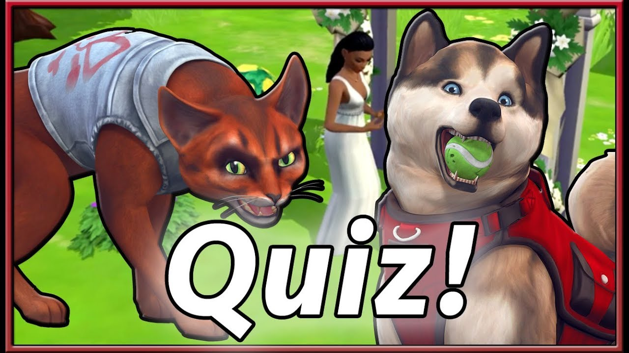 New Personality Quiz More The Sims 4 Cats Dogs The Sims