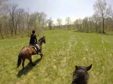 New Market Middletown Valley Hunter Pace