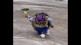 Кот альпинист. Восхождение кота Александра