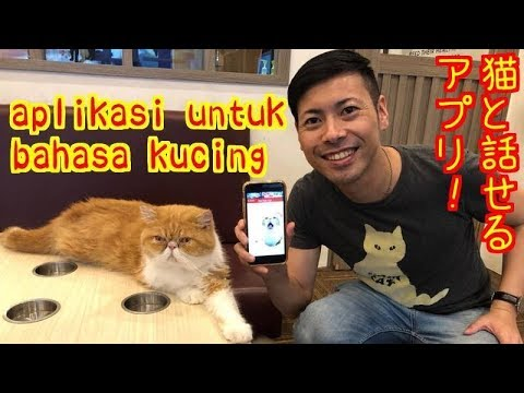 Aplikasi Bicara Dengan Bahasa Kucing Vol 1 Youtube