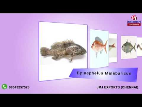 Fresh And River Fish By Jmj Exports, Chennai