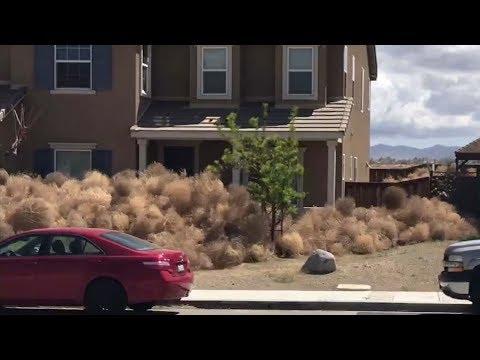Tumbleweeds inundate homes in High Desert communities   ABC7