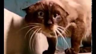 Это самый странный кот и оператор на свете