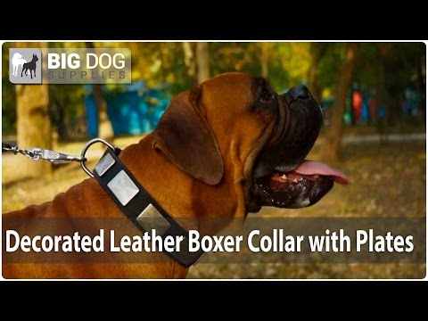 Cute and Stunning Boxer in Water Resistant Practical Nylon Dog Collar