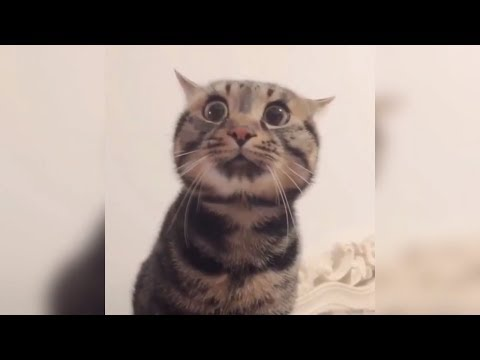 Funny 😻 Cats and 🐶 Dogs 😇What the cute (WTC#2)