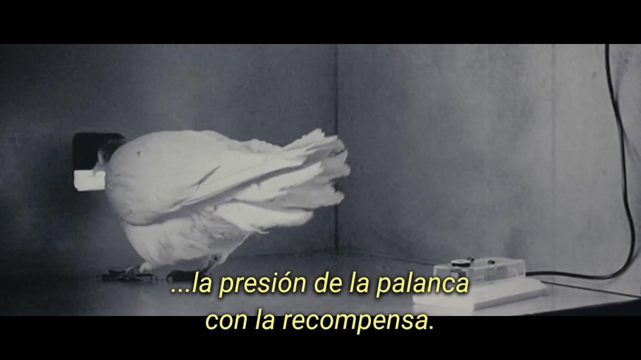 Mr Nobody Superstición De La Paloma