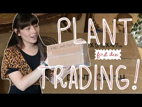 How To Trade Plants With Friends   Unboxing Plant Mail