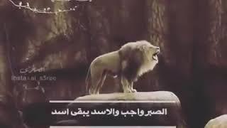 قصيدة شعر الأسد يبقى أسد Youtube