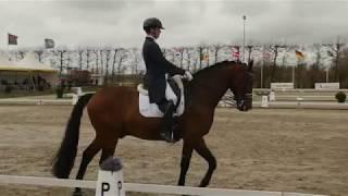 Robin VAN LIEROP NED Grand Prix CDI Zeeland 2018 CUPIDO