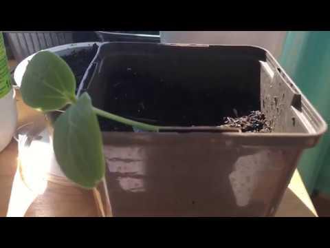 semis qui filent : comment les récupérer en 3 minutes !