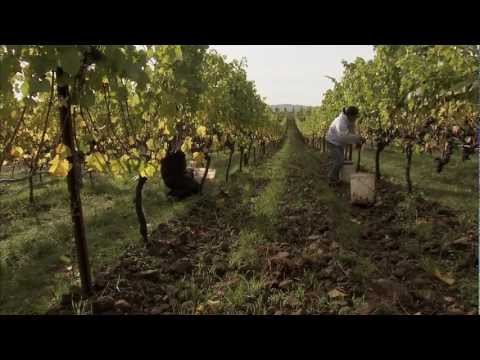 An Introduction to Biodynamic Viticulture