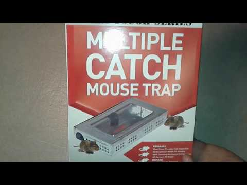 Repeater Multiple Catch Mouse Trap Review - Catching Mice In Our Motorhome | How To