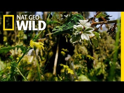 Nile's Exotic Creatures | The Nile