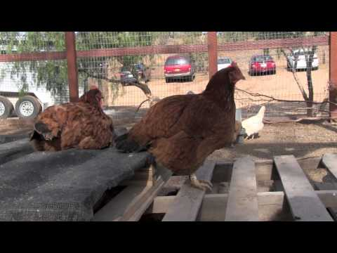 Farm Sanctuary visit in Acton California