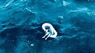 En 1961 Esta Niña fue Encontrada en Alta Mar. Décadas Después Ella Reveló la Espeluznante Verdad
