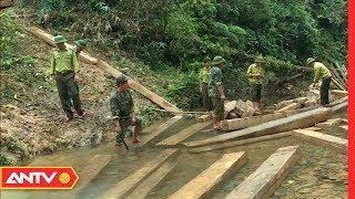 Có hay không kiểm lâm 'bảo kê' cho lâm tặc phá rừng di sản?! | Điều tra | ANTV