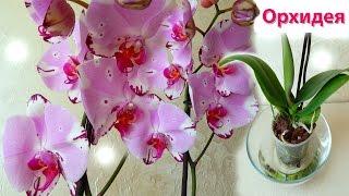 Орхидея уход как поливать орхидею - Комнатная орхидея - Домашние растения(Видео о том как ухаживать за орхидеей дома и как поливать орхидею. Уход за орхидеями в домашних условиях..., 2016-08-17T12:06:28.000Z)