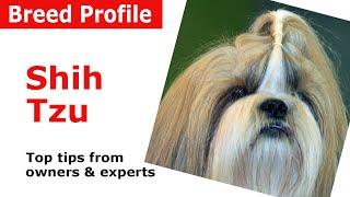 Shih Tzu Dog Breed Guide