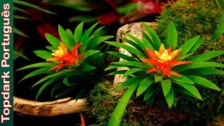10 Lindas Plantas Nativas Do Brasil