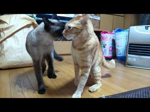 ケンカを止めに入って、ブッ飛ばされちゃった黒猫