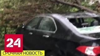 Сильные порывы ветра в Москве привели к гибели людей