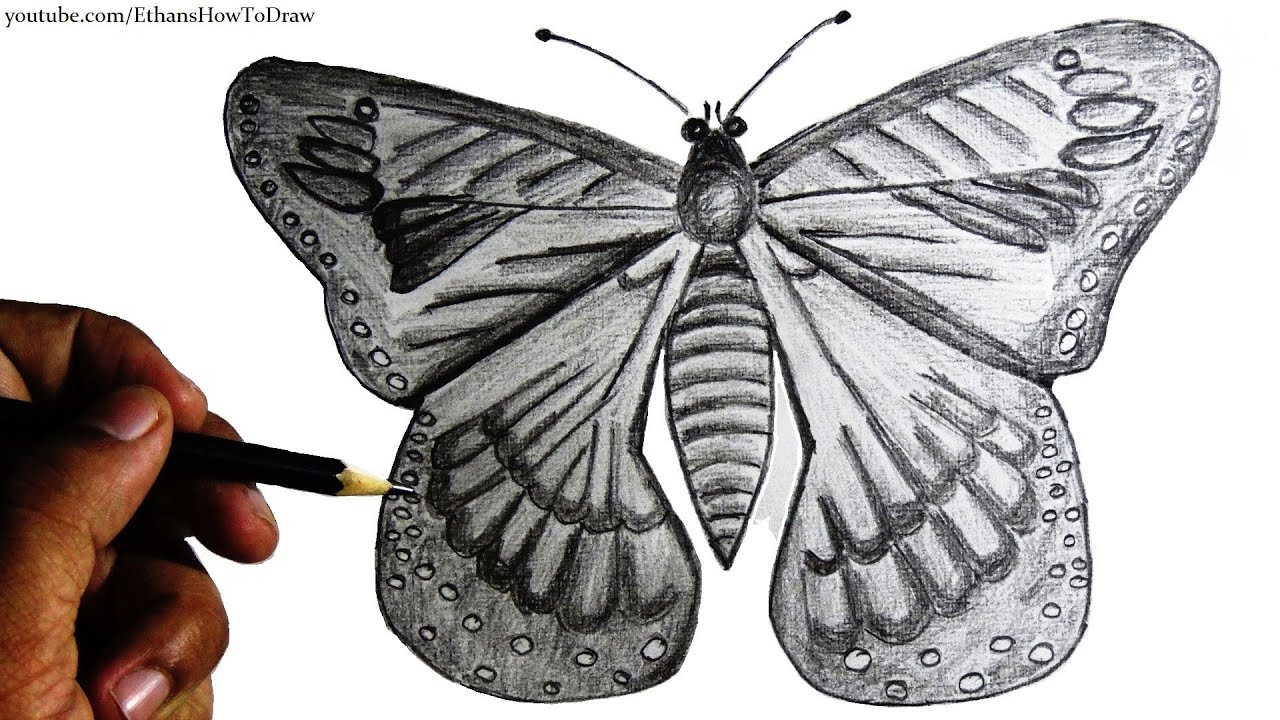 how to draw a butterfly for kids step by step pencil drawing