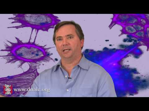 Linking Genes, the Brain and Behavior (5 of 8)
