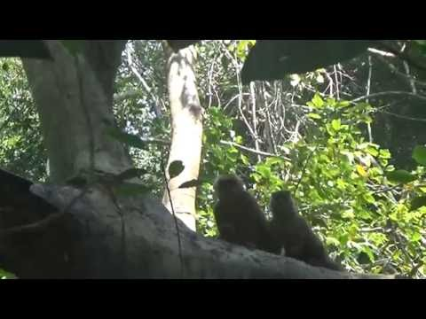 Tambopata - La Isla de los Monos 1 - 2016