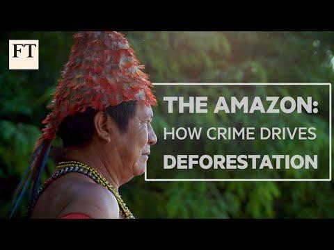 brazil's-amazon:-how-crime-drives-deforestation-|-ft-features