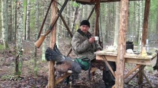 Глухарь весенняя охота