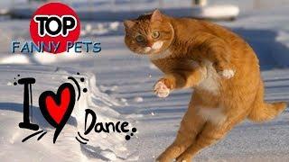 ЛУЧШИЕ ПРИКОЛЫ 2019 😹 ТОП СМЕШНЫХ ВИДЕО С КОТАМИ.  Смешные животные танцуют. TOP FUNNY PETS.