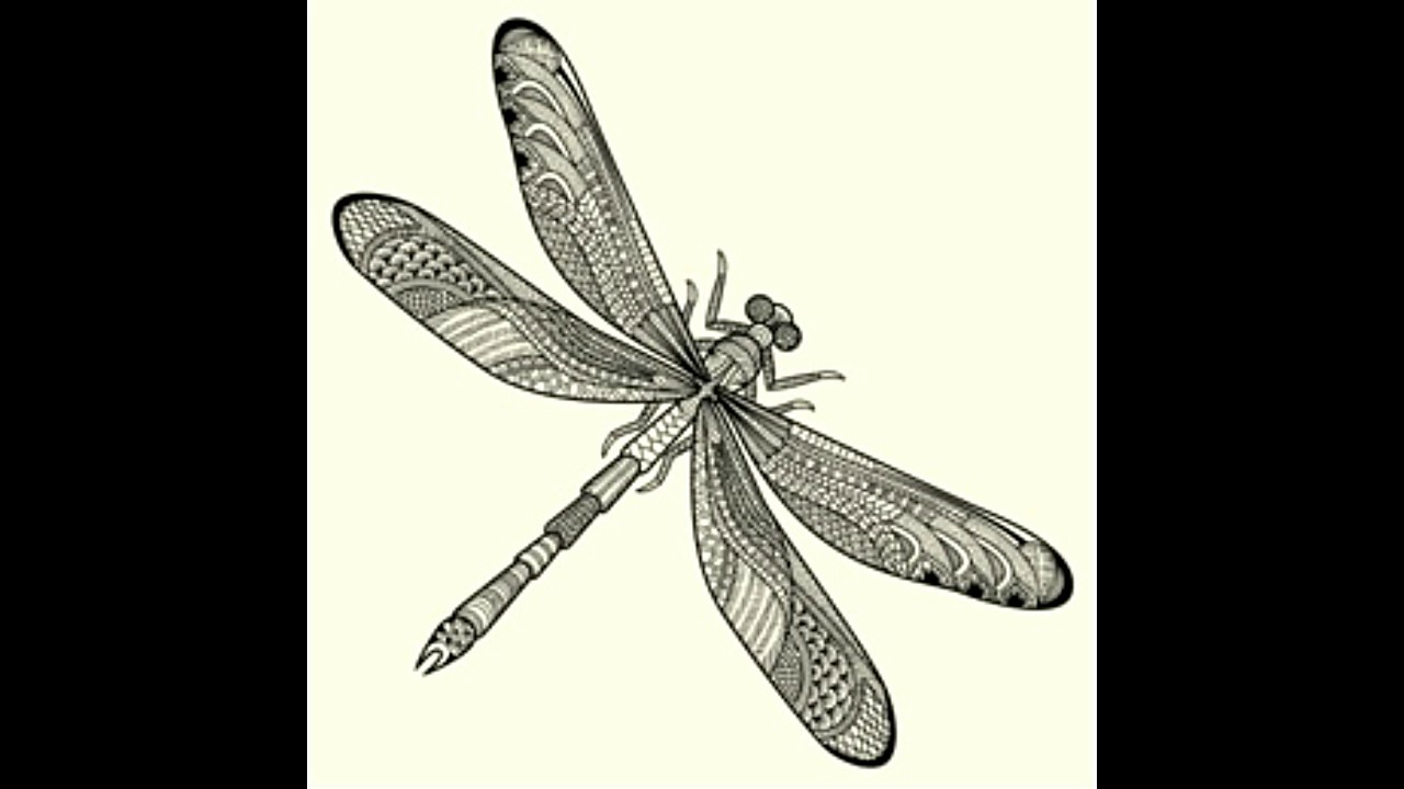 Mystifying Information About The Symbolism Of A Dragonfly Youtube