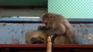 ЗАБОТЛИВЫЙ МУЖ делает массаж жене  Приколы с животнымиСМЕШНЫЕ ЖИВОТНЫЕ приколы   Funny Animals Jokes