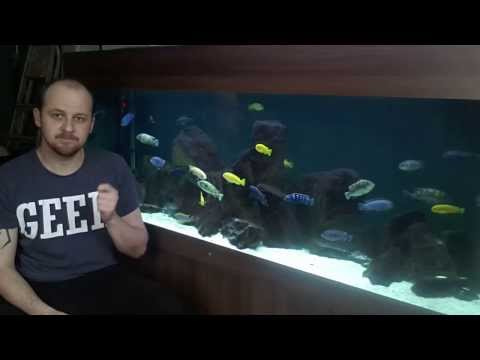 African Cichlids - Do They Really Need Hiding Places