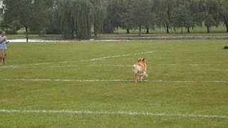 Gary At The 2009 Hoffman Estates Canine Frisbee Contest