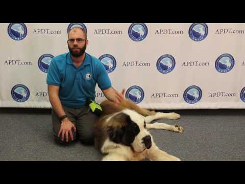 Big Dogs, Big Hearts - The Difference in  Owning a Large Breed Dog (APDT Train Your Dog Month)