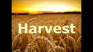 Harvest   SD 480p