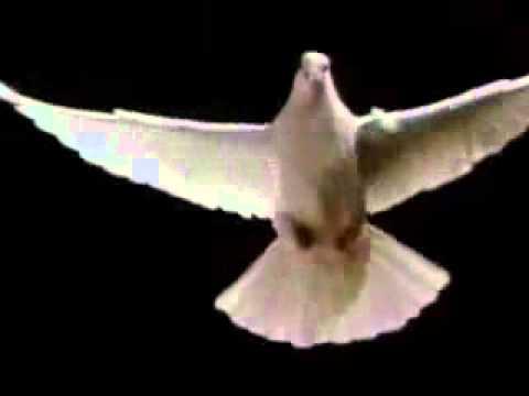 Pomba Simbolo Do Espirito Santo Youtube 2 Youtube