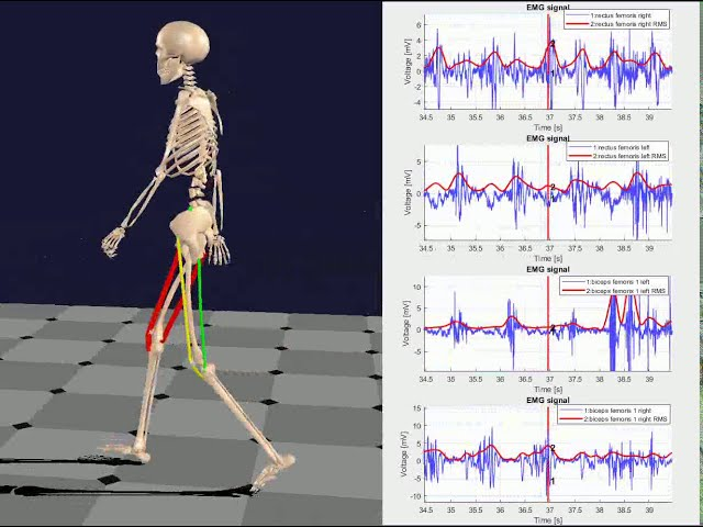 Xsens motion capture data with EMG with BoB Biomechanics Ltd