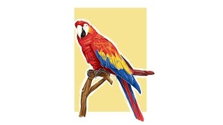 Time Lapse Adobe Illustrator : parrot vector painting illustration